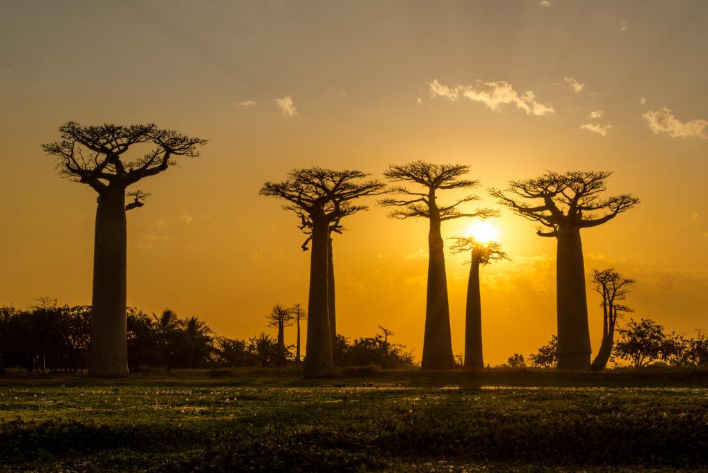Evening in Baobab avenue - Madagascar